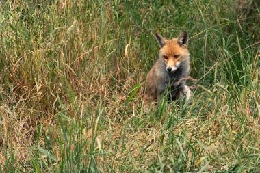 23-06-18 British Wildlife Centre DavidIMG_934100004